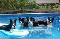 Our dogs in the pool